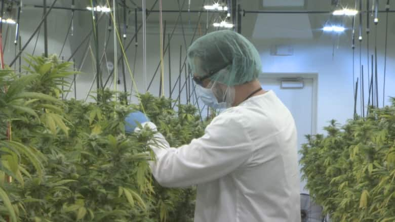Meet Nova Scotia's 3 legal cannabis growers
