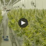 CannTrust strives to be a leader in the cannabis industry with a 450,000 square foot facility in Niagara, ON.