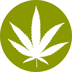Sign up for the Cannabis Daily Greenletter