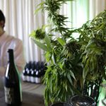 Cannabis company Canopy Growth's stock soars 30% as Corona brewer increases stake