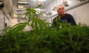 Biome Grow Receives Amended Health Canada Sales License for its Nova Scotia-based Highland Grow.