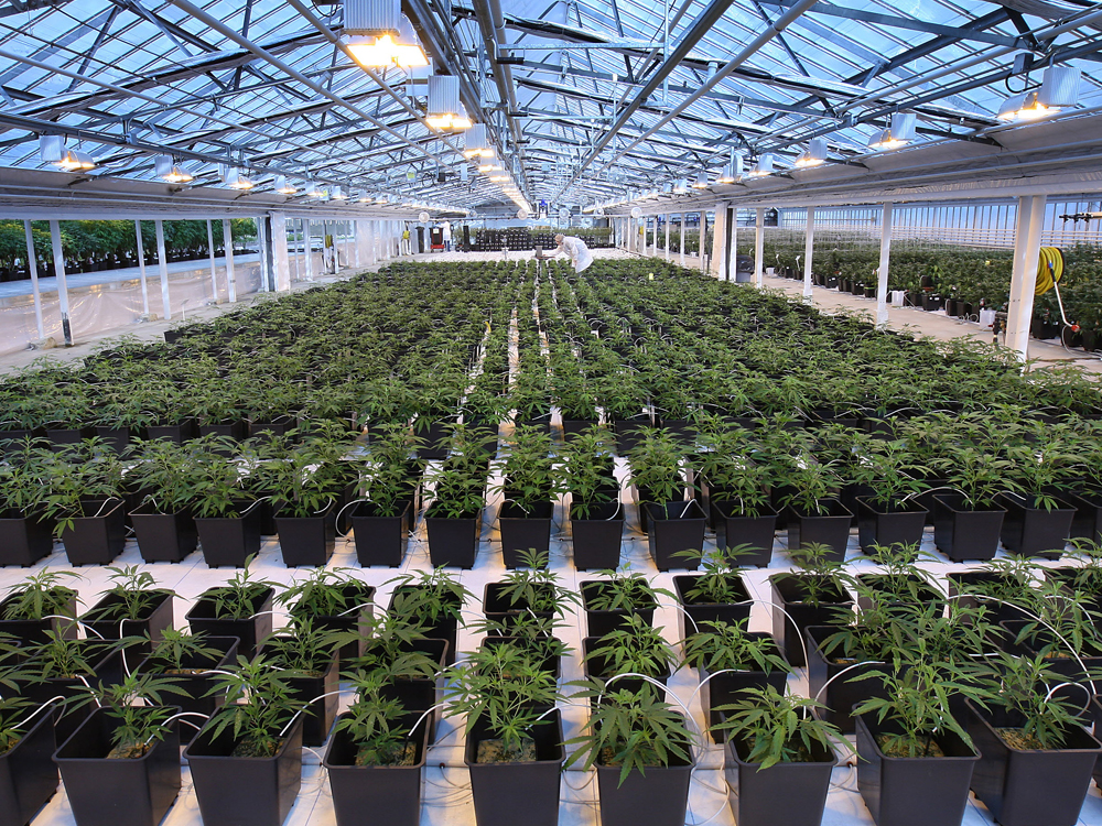 Canopy Growth Unveils Plan to Acquire American Cannabis Company Acreage Holdings for $3.4 Billion